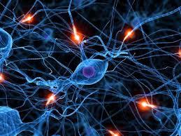 cerebro10