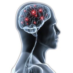 10 Cosas curiosas acerca del cerebro humano.
