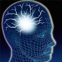 cerebro4