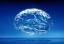 cerebro9